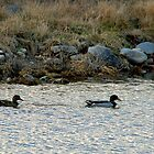 Duel Swim by Mechelep