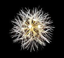 Sparkle flower by Akshay Hegde