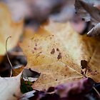 dead leaves by codaimages