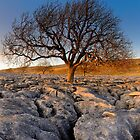 Tree in Stone by Simon Bowen