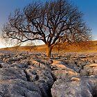 Tree in Stone by Simon Bowen