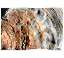 Oyster lace Poster