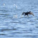 A walk in water by vasu
