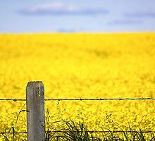 Alberta Prairies by Pam Hogg