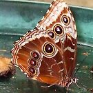 Butterfly 1008 by Angelica Frances