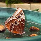 Butterfly 1008a by Angelica Frances