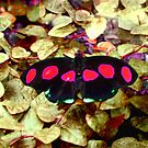Butterfly 1006a by Angelica Frances