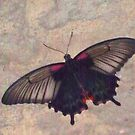Butterfly 1004 by Angelica Frances