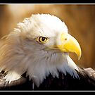 Eagle Eye by KBritt