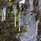 Icicles by ArchivePhoto