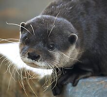 Otterly Gorgeous by SharonD