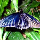 Butterfly 1015 by Angelica Frances