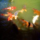 Koi 13 by Angelica Frances