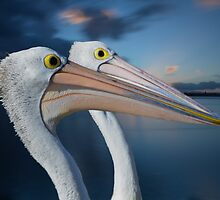 Twin Beaks by bazcelt