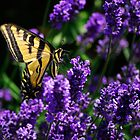 Butterfly and Flowers by Lee LaFontaine