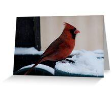 Cardinal Awaits Greeting Card