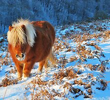 Ginger Pony in the Snow by jonshort58