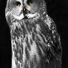 Great Grey Owl by Sheila Laurens