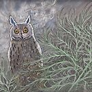 Long Eared Owl by MagsWilliamson