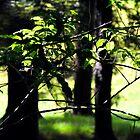Three trees by joche