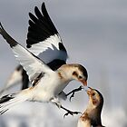 Touch / Snow Buntings by Gary Fairhead