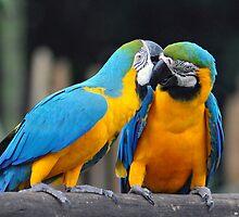 Macaws - Singapore (3) by Ralph de Zilva