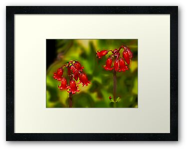 Red Bell Succulent Flowers by Geoffrey Higges