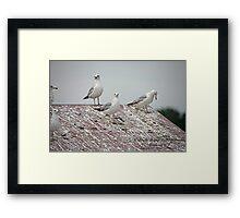 Waterski Ramp Lake Monona Framed Print