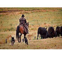 Rounding the herd Photographic Print