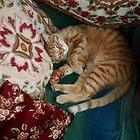 cushioned by CatharineAmato