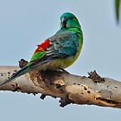 ''Red-rumped Parrot'' by bowenite