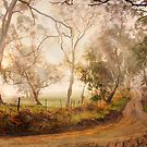 Morning Mist - Monkhouse Rd, Nairne, Adelaide Hills, SA by Mark Richards