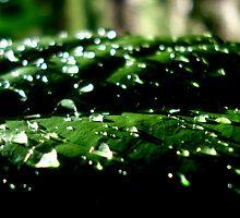 Blurry droplets by Akshay Hegde