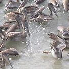 Pelicans I by PtoVallartaMex