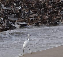 Crazy Times For Crazy Pelicans IV - Tiempos Locos Con Pelicanos Locos by Bernhard Matejka