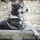 Her Name is Tuya   by Dyle Warren
