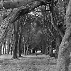 Trees near Phoenix Park School, Dublin by Dave  Kennedy