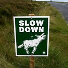 Slow Down by Pete  Burton