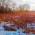 Wintry Marsh in New England by Jillian Rubman