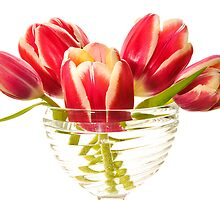 Tulips pink in a vase. by larisa  fedotova