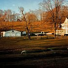 Pastural Scene in New Jersey by Debra Fedchin