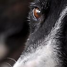 Behind Hazel Eyes by JasJustHuman