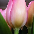 Towering Tulip by Laura Kelk