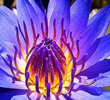 My Glorious Purple Water Lily by AlyZen