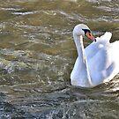 Swan. by Tigersoul