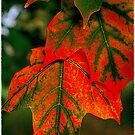Red and green autumn leaves...you can&#x27;t bring me down by jammingene