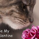 Be My Valentine Maine Coon Cat  by elainejhillson