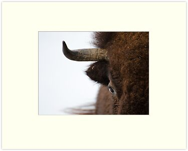 Bull's Eye by Johanne Brunet