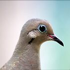Mourning Dove Portrait by freevette
