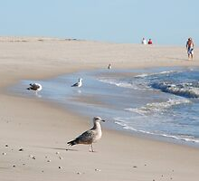 Gulls in the surf by Cape Publishing